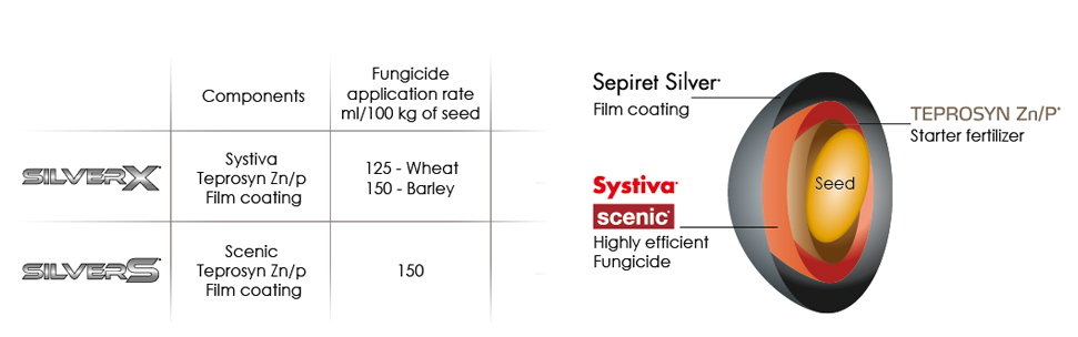 silver-section-seed